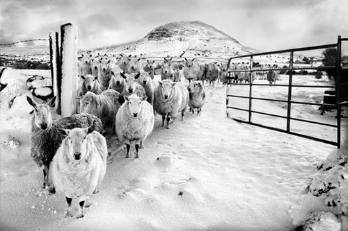 50+ Beautiful Black and White Photography 9