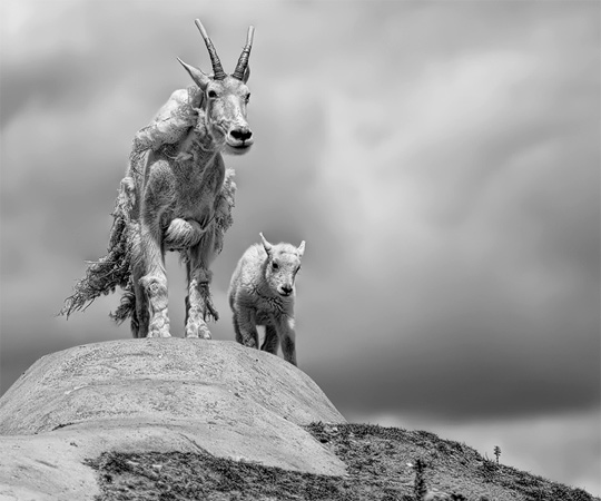 50+ Beautiful Black and White Photography 12