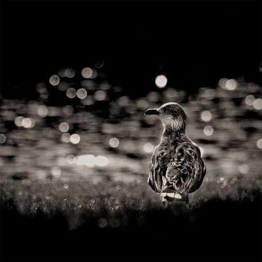 50+ Beautiful Black and White Photography 13
