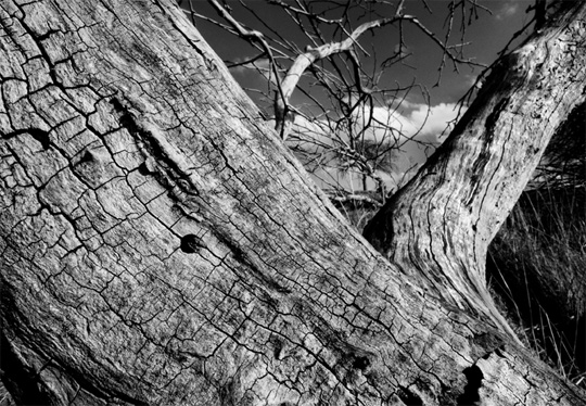 50+ Beautiful Black and White Photography 14