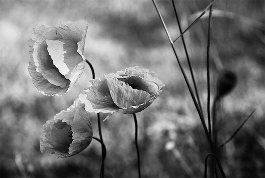 50+ Beautiful Black and White Photography 19