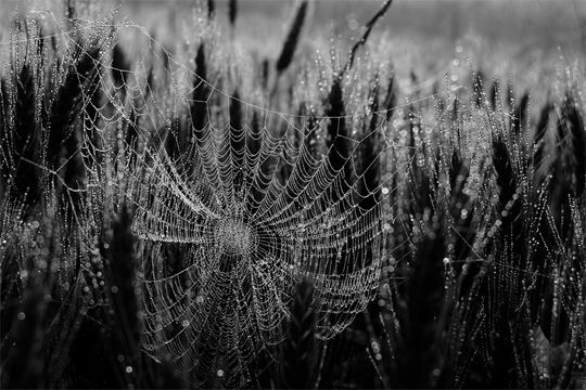 50+ Beautiful Black and White Photography 31