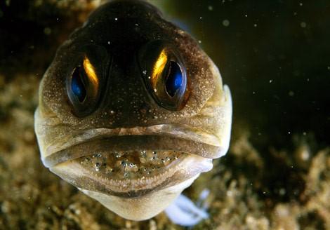 50 Beautiful Underwater Photos 1