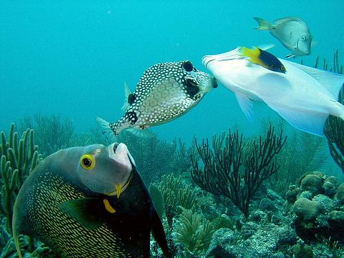 50 Beautiful Underwater Photos 12