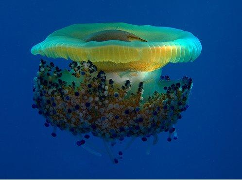 50 Beautiful Underwater Photos 13