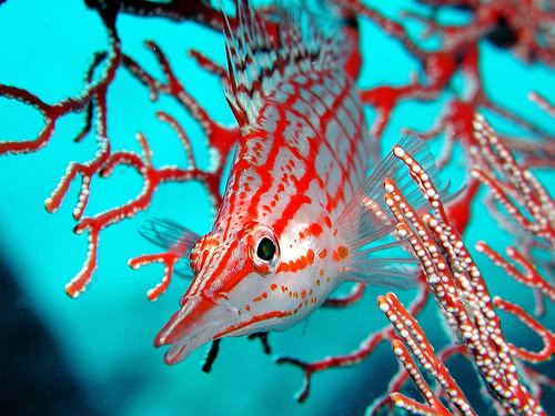 50 Beautiful Underwater Photos 16