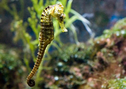 50 Beautiful Underwater Photos 18