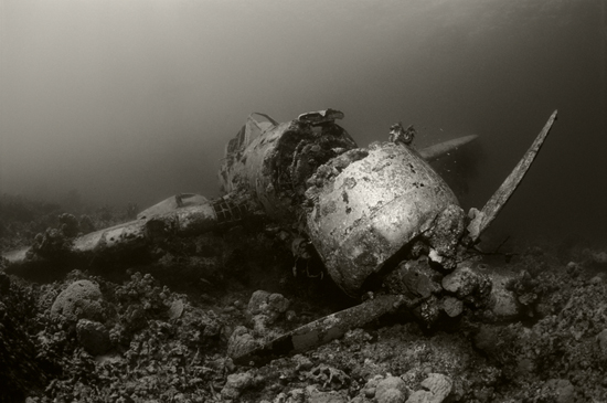 50 Beautiful Underwater Photos 21