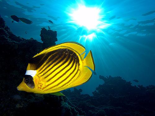 50 Beautiful Underwater Photos 3