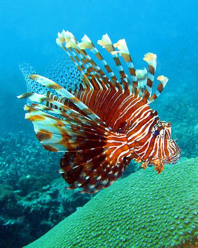 50 Beautiful Underwater Photos 28
