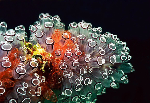 50 Beautiful Underwater Photos 31