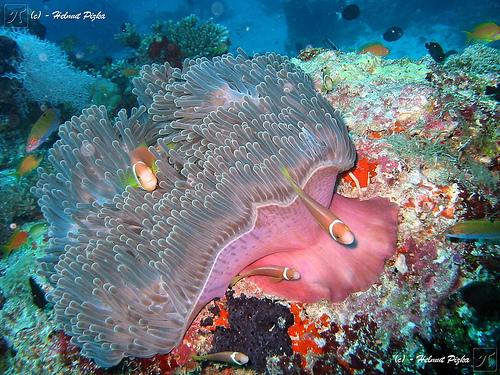 50 Beautiful Underwater Photos 33