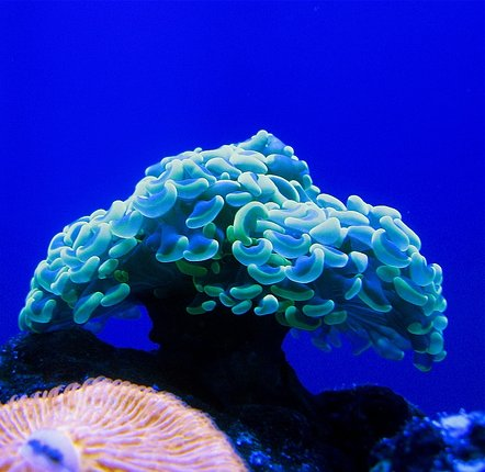 50 Beautiful Underwater Photos 4