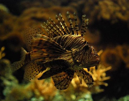 50 Beautiful Underwater Photos 34