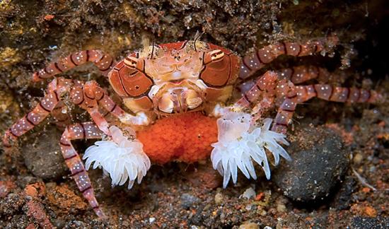 50 Beautiful Underwater Photos 41