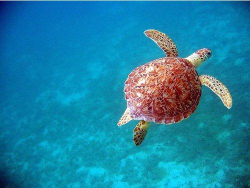 50 Beautiful Underwater Photos 7