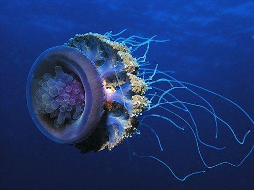 50 Beautiful Underwater Photos 8