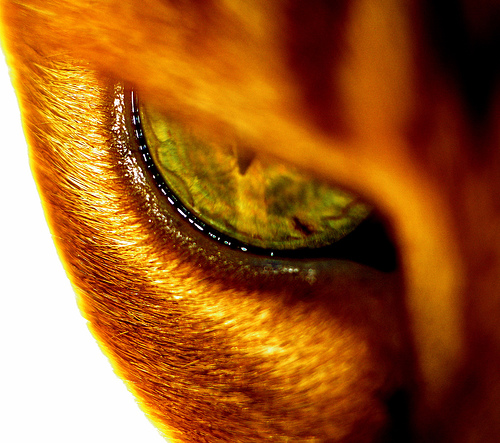 56 Breathtaking Examples of Macro Photography 13