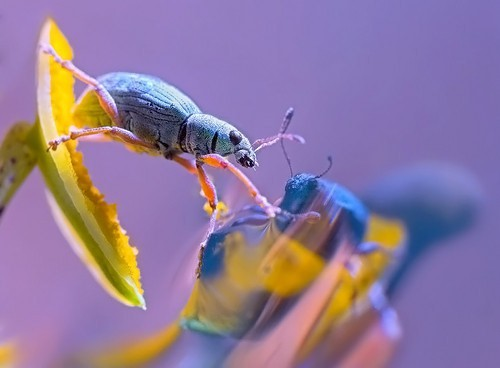 56 Breathtaking Examples of Macro Photography 3