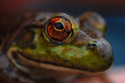 56 Breathtaking Examples of Macro Photography 23