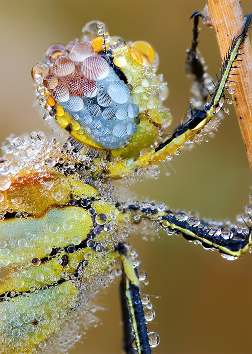 56 Breathtaking Examples of Macro Photography