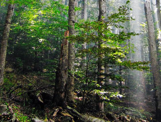 40 Beautiful National Parks Around The Globe 26