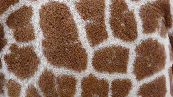 10 Free Animal Fur and Skin Texture Pack