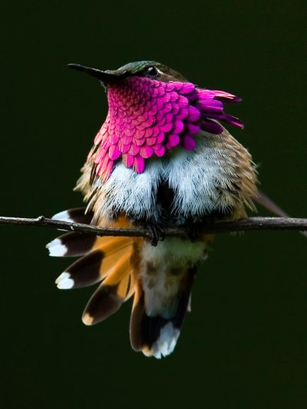 75 Beautiful Birds Photography for Inspiration 70