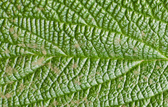 25 Most Useful Free High Resolution Leaf Textures