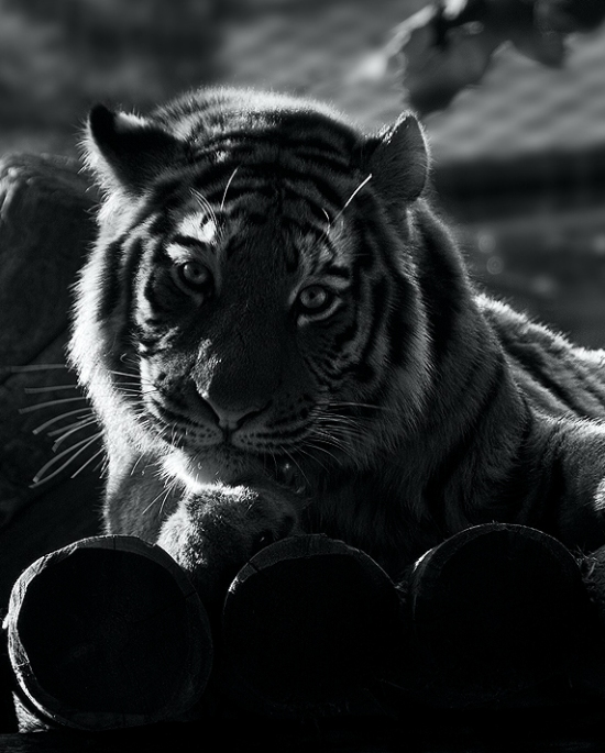 30 Stunning Examples of Black and White Photography 24