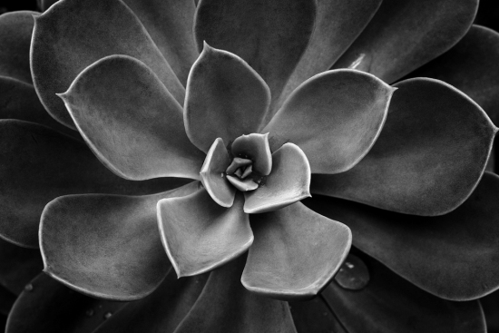 30 Stunning Examples of Black and White Photography 25
